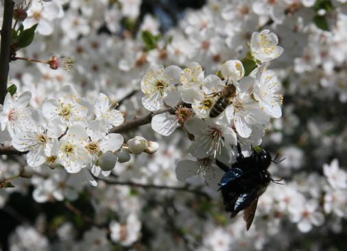wertvoll für über 150 Insektenarten